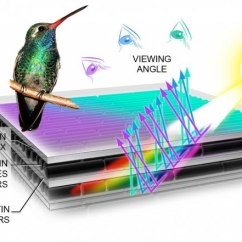 Hummingbird Diagram Of Color Wiring Car Aircon How Birds Make Colorful Feathers Bird Academy The Cornell Lab Iridescent Change With Different Viewing Angles An Effect Caused By Protein Structure