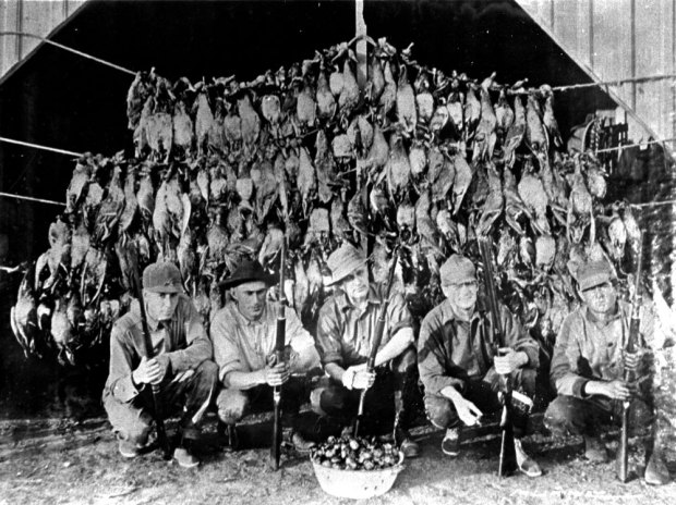 Image result for market hunting waterfowl