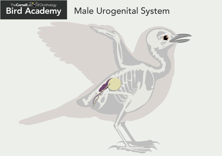 All About Bird Anatomy   Bird Academy • The Cornell Lab