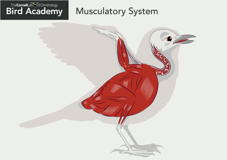 All About Bird Anatomy