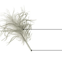 Diagram Types Of Feathers Chevelle Wiring Everything You Need To Know About Bird Academy