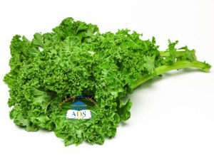 Curly kale 1