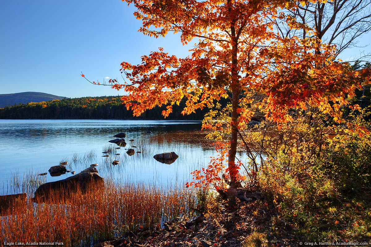 Free Computer Wallpaper Fall Leaves Eagle Lake Photos Acadia National Park Set 1