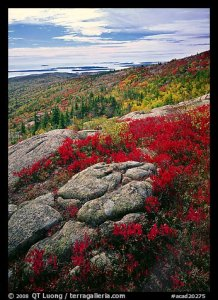 QT Luong and Acadia National Park fall foliage