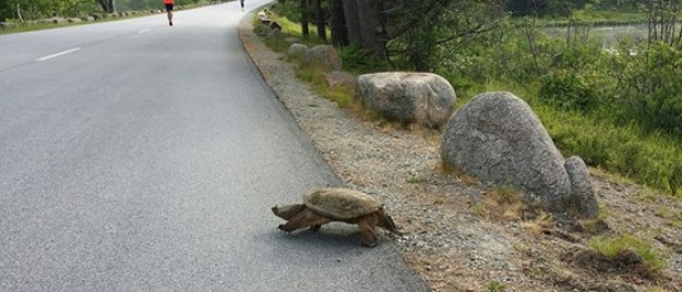 wildlife in acadia
