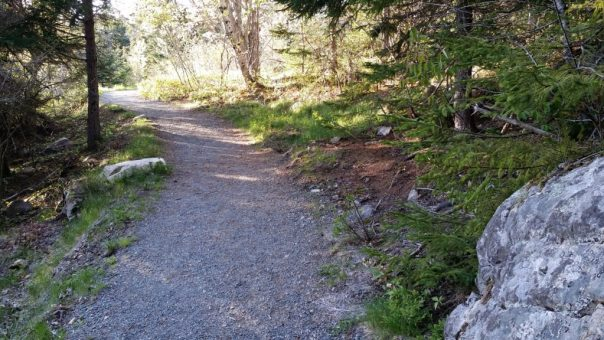 A section of a three-quarters of a mile long accessible loop of the Ship Harbor Trail in Acadia National Park.