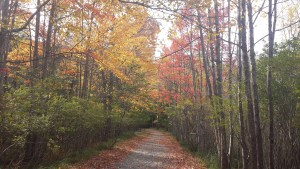 Fall foliage on the Ship Harbor Trail in Acadia National Park.