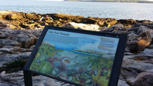 A wayside exhibit explains the life of a tide pool off the Ship Harbor Trail in Acadia National Park.