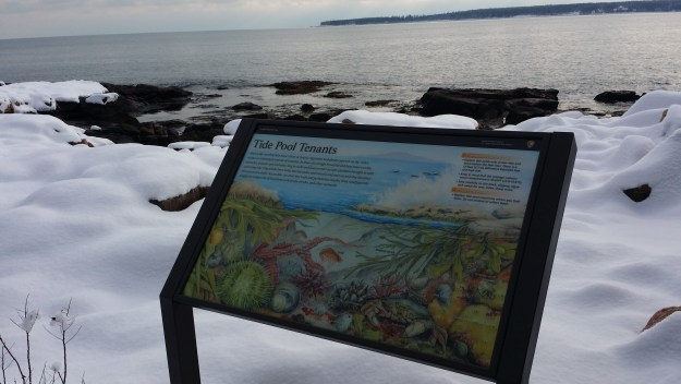 A wayside exhibit on tide pools near the ocean off the Ship Harbor Trail in Acadia National Park.