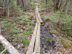 Old bog walk on the Valley Cove Trail in Acadia National Park