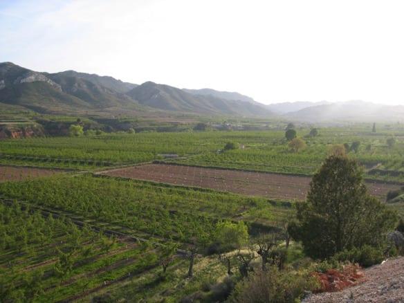 Huerta vista desde la villa de Calanda