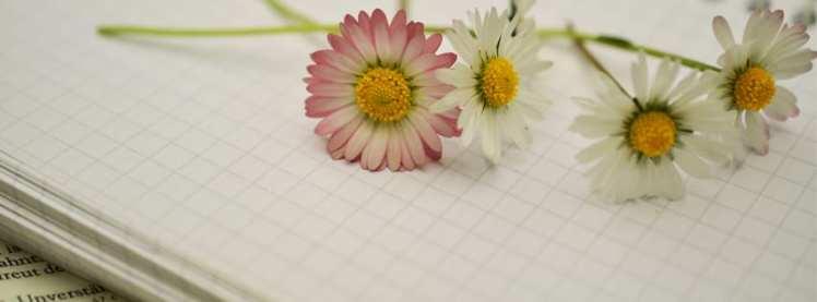 La poesía en Amarante. Novedades primavera