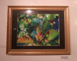 """""""Ladybug, Ladybug your children have arrived"""" by Julia Gregory"""
