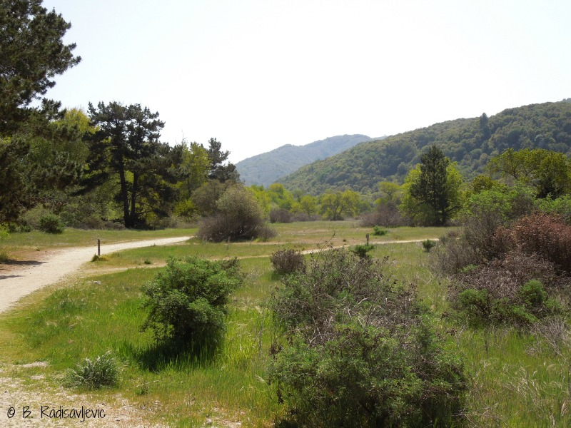 Why Walk in Garland Ranch Regional Park?