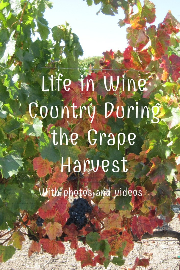 Life in Wine Country During the Grape Harvest illustrated with photos and videos.
