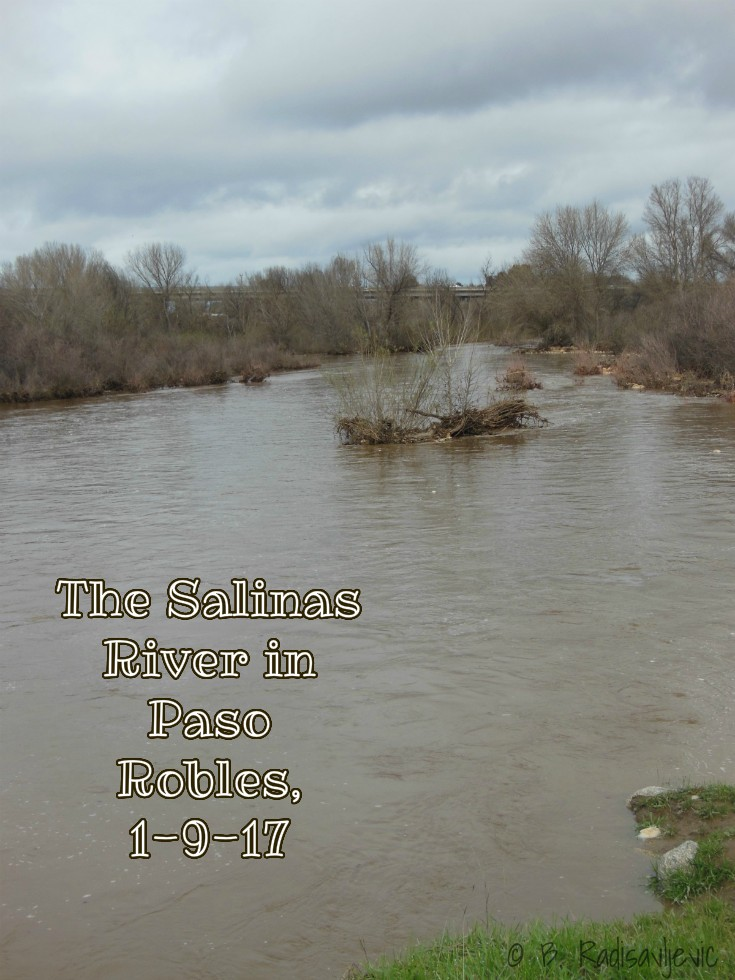 The Salinas River in Paso Robles