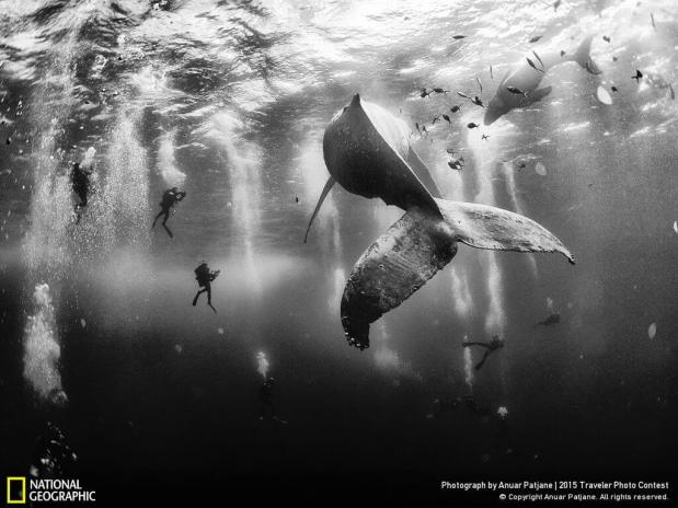 Traveler Photo Contest (National Geographic)