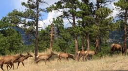 rocky-mountain-national-park-colorado