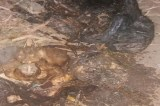 Corpo é encontrado dentro de uma sacola em Juazeiro
