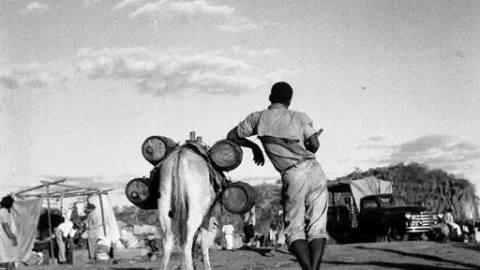 China importa milhões de burros para usar na medicina tradicional