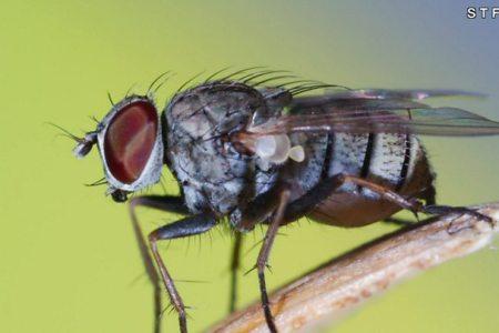 Por que é tão difícil pegar uma mosca?