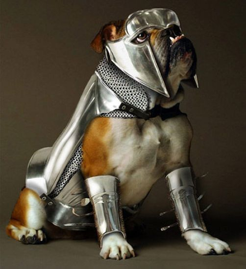 dog-in-shining-armor