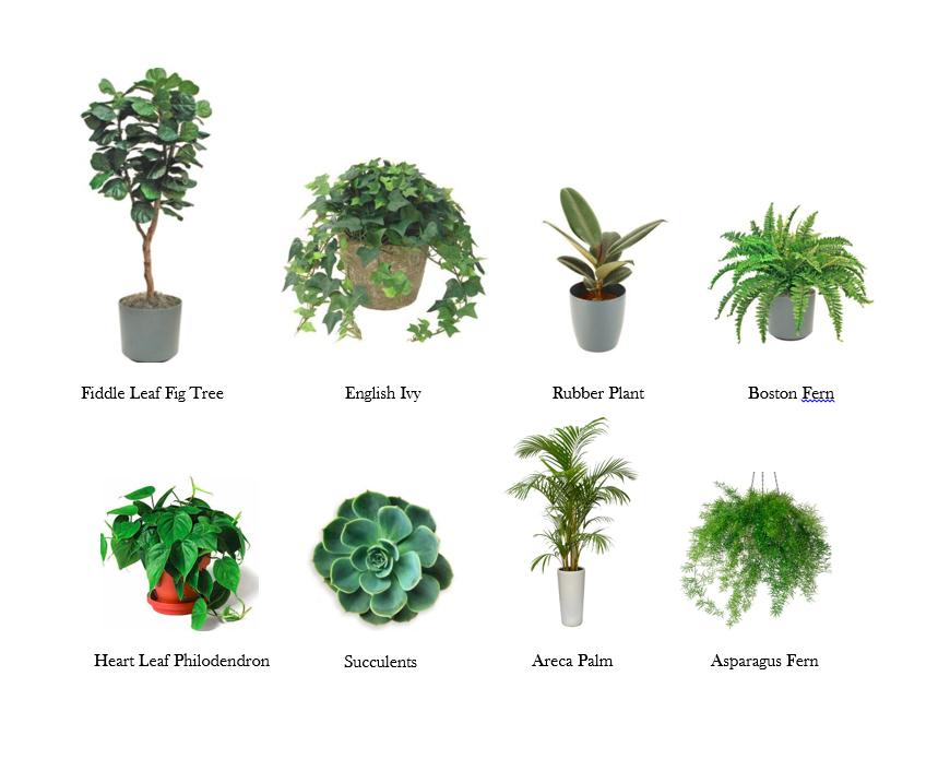 The Dirt on my Favorite House Plants – A Carrie'd Affair Blog