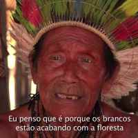 """""""Para onde foram as andorinhas?"""" - Curta-metragem documenta o impacto das mudanças climáticas nos povos do Parque Indígena do Xingu"""