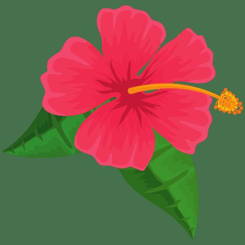 ho'oponopono fiore