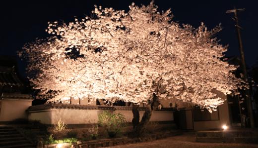 【Photo Album】夜桜 in 安福寺@京都府木津川市