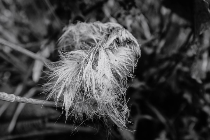 weed-fluff