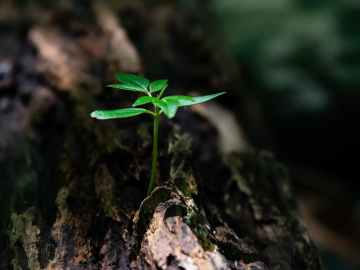 selective focus photo of green plant seedling on tree trunk