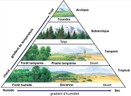types of rainfall with diagrams 2006 e350 fuse box diagram qu'est-ce qu'un biome? — site des ressources d'acces pour enseigner la science de vie et ...
