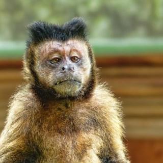 La viruela del mono está en los Estados Unidos