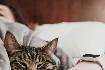 Picture of someone with a chronic illness in bed with their cat. Working with a disability.