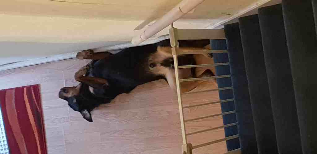 Extra banister and upside down rottweiler