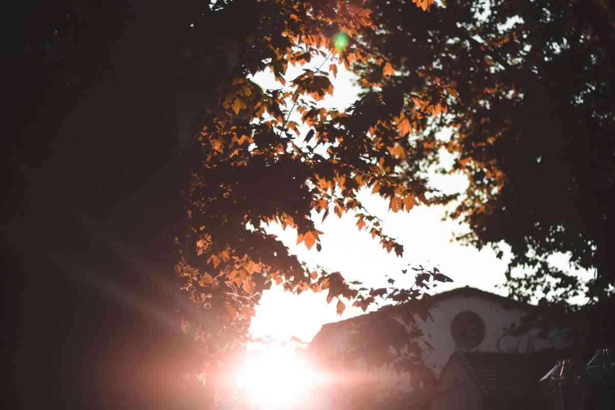 Photo of light shining through trees