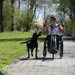 International Assistance Dog Week