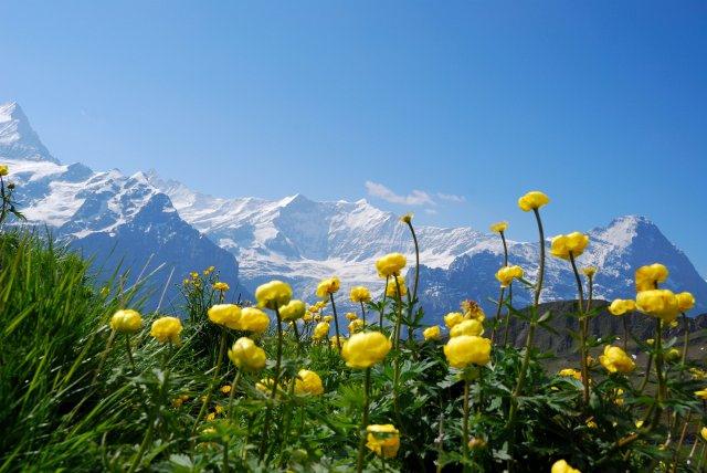 Switzerland Highlights