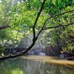 daintree forest cape tribulation australia