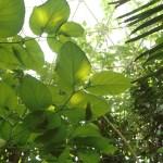 biosphere rainforest
