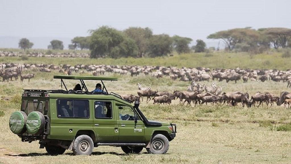 herd of wildebeast tanzania