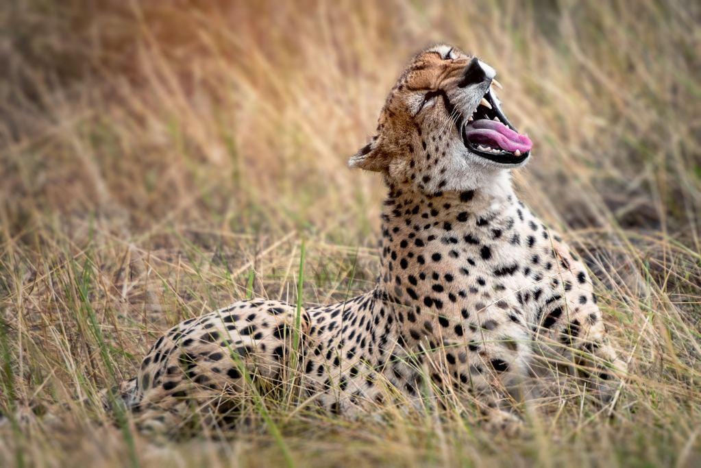 Serengeti accessible safari Tanzania