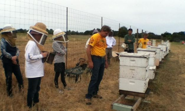 VIDEO: What's the Buzz? Soil Born Farms Holds Beekeeping Classes