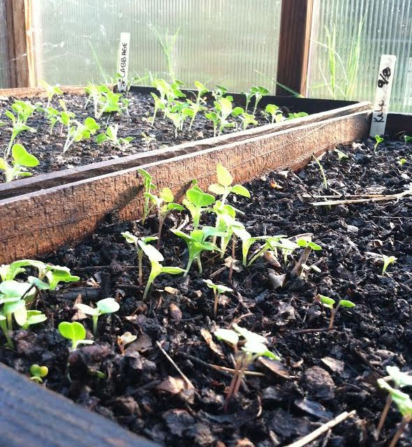2014 was the year of local Urban Agriculture in Sacramento