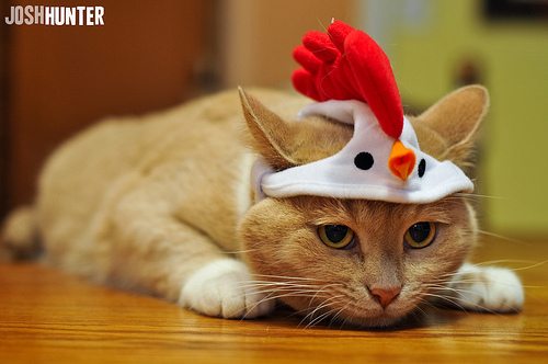cat as chicken Accidental Epicurean