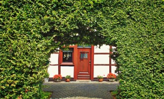 Garden Hedging – What are your Options?