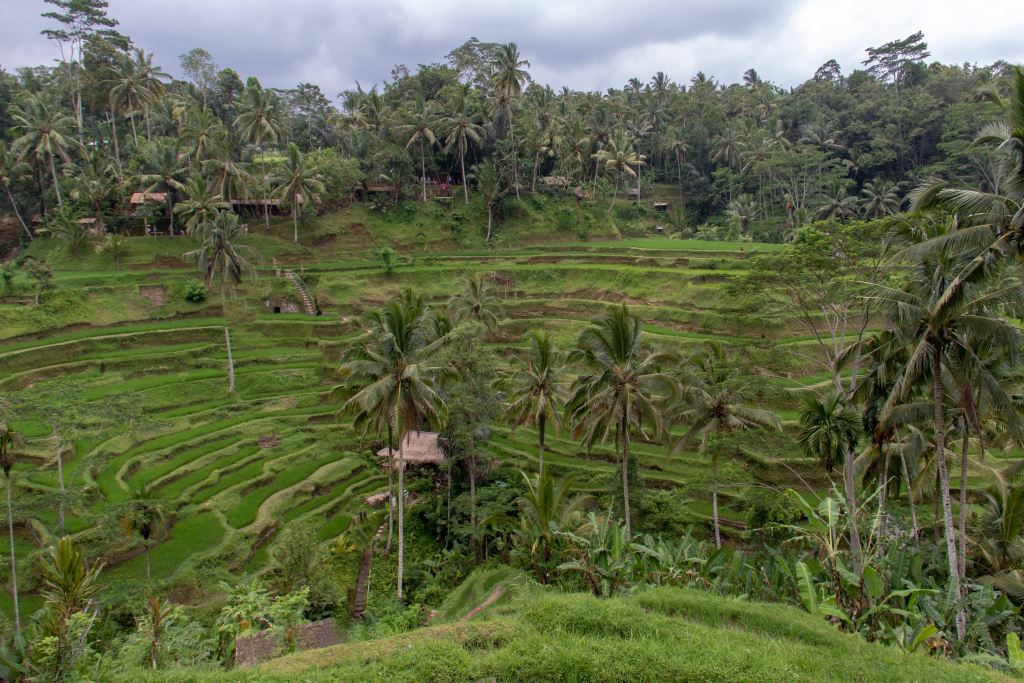 How to Plan a Stress-Free Family Holiday to Ubud, Bali