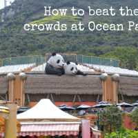 The ultimate guide to beating the crowds at Ocean Park!