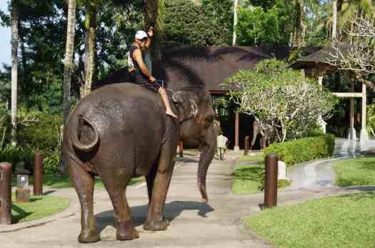 Bali-elephant-safari-lodge